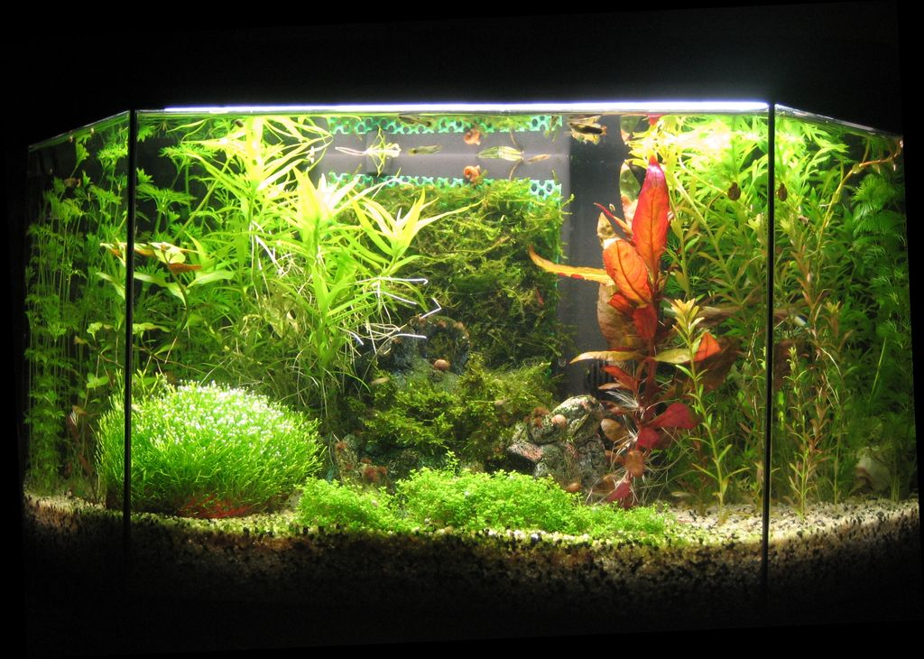 décoration aquarium crevette